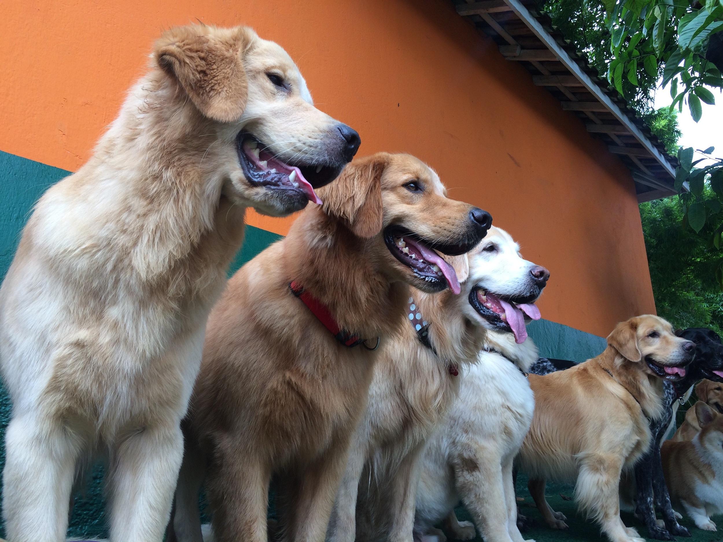 Siga a DogCamp no Instagram : @dogcampday