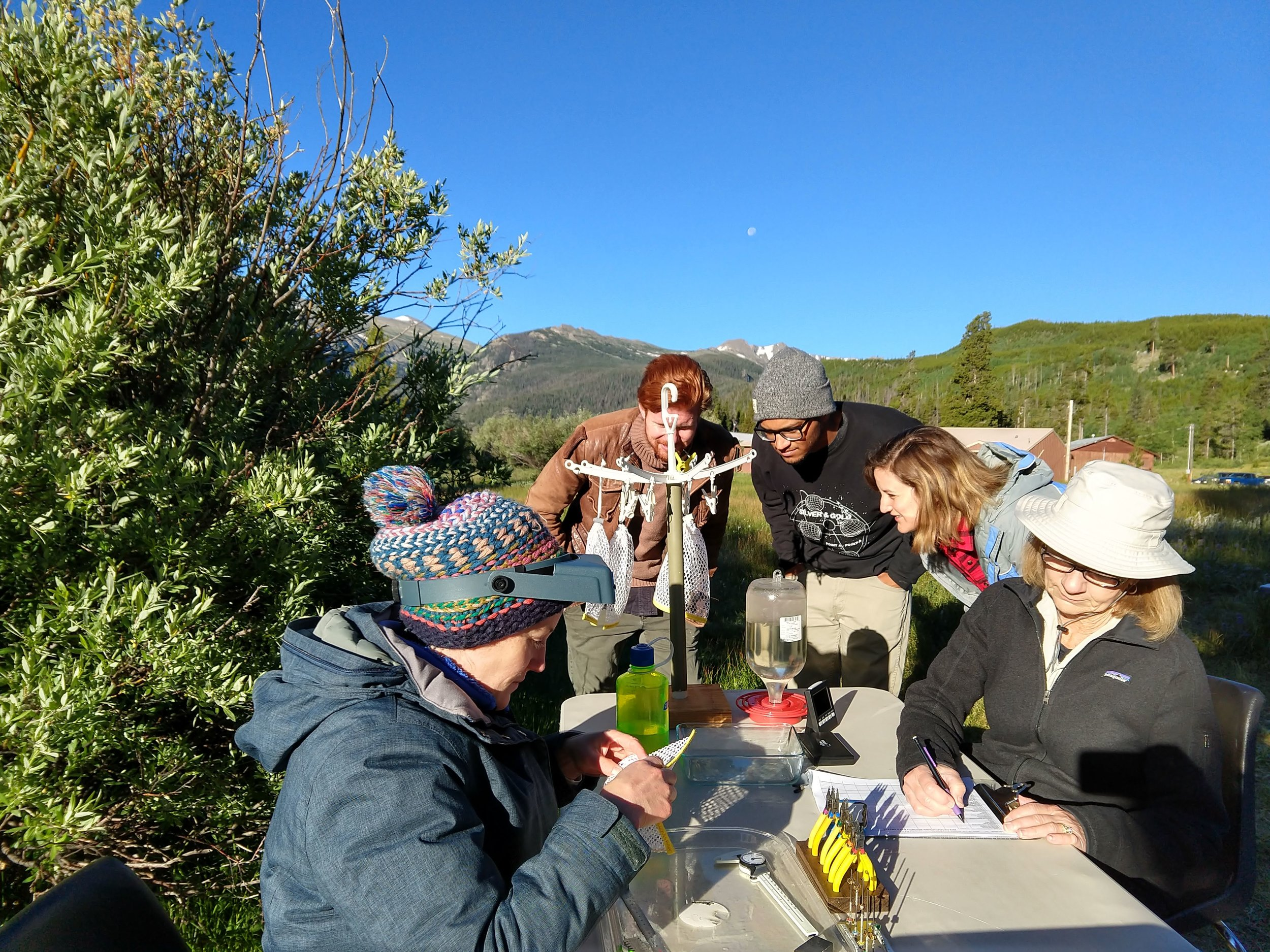The band looks at bags of hummingbirds, while scientists and volunteers record data (e.g. weight, age, gender).