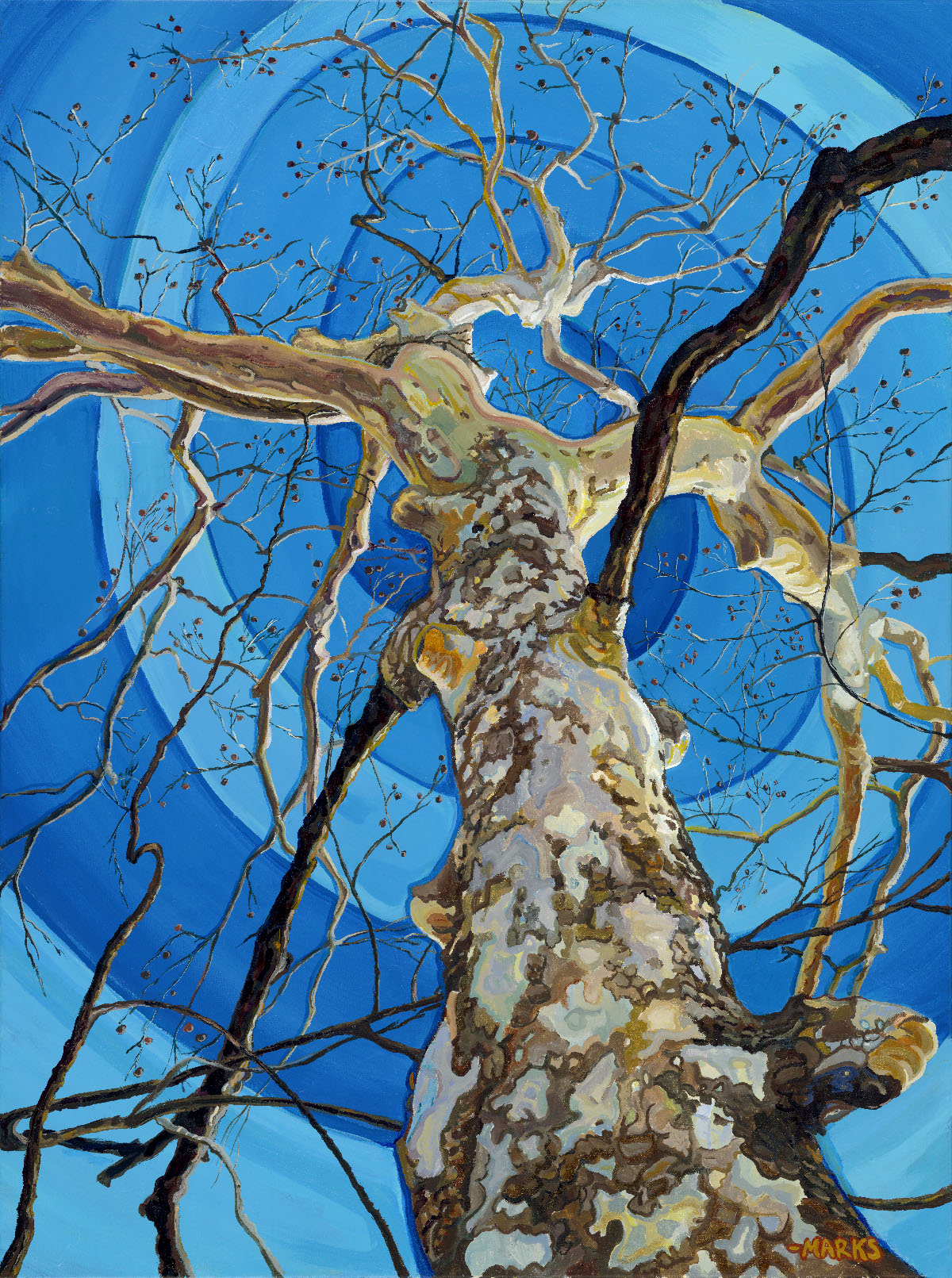 Sycamore - 30 x 40 - Acrylic on Canvas $3,000    Sold