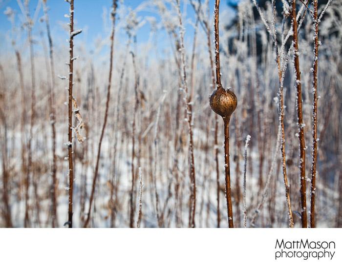 Field of Hoars Frost