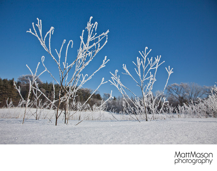 Hoars Frost against a blue sky