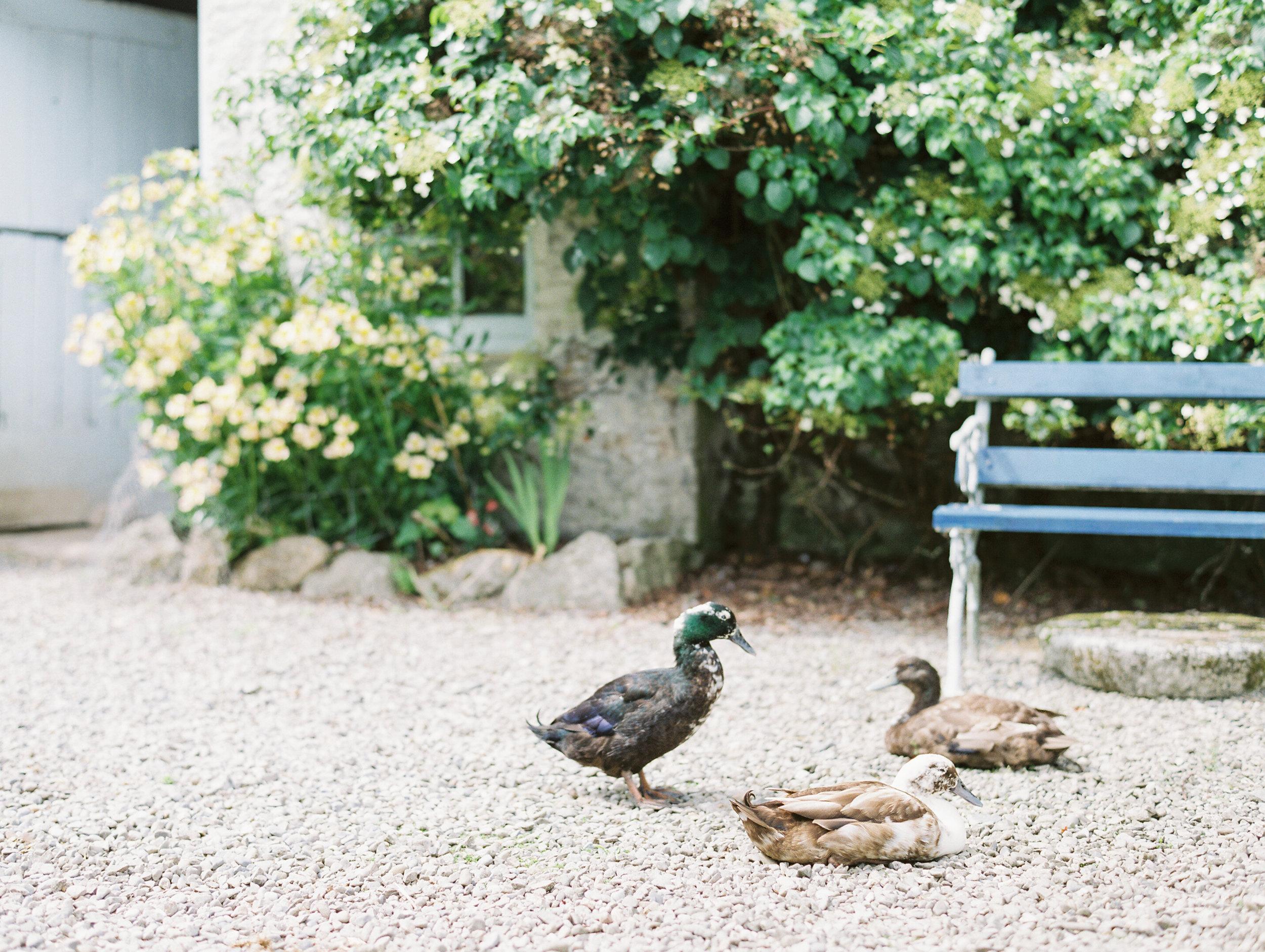 As_Ever_Photography_Secret_Garden-24.jpg
