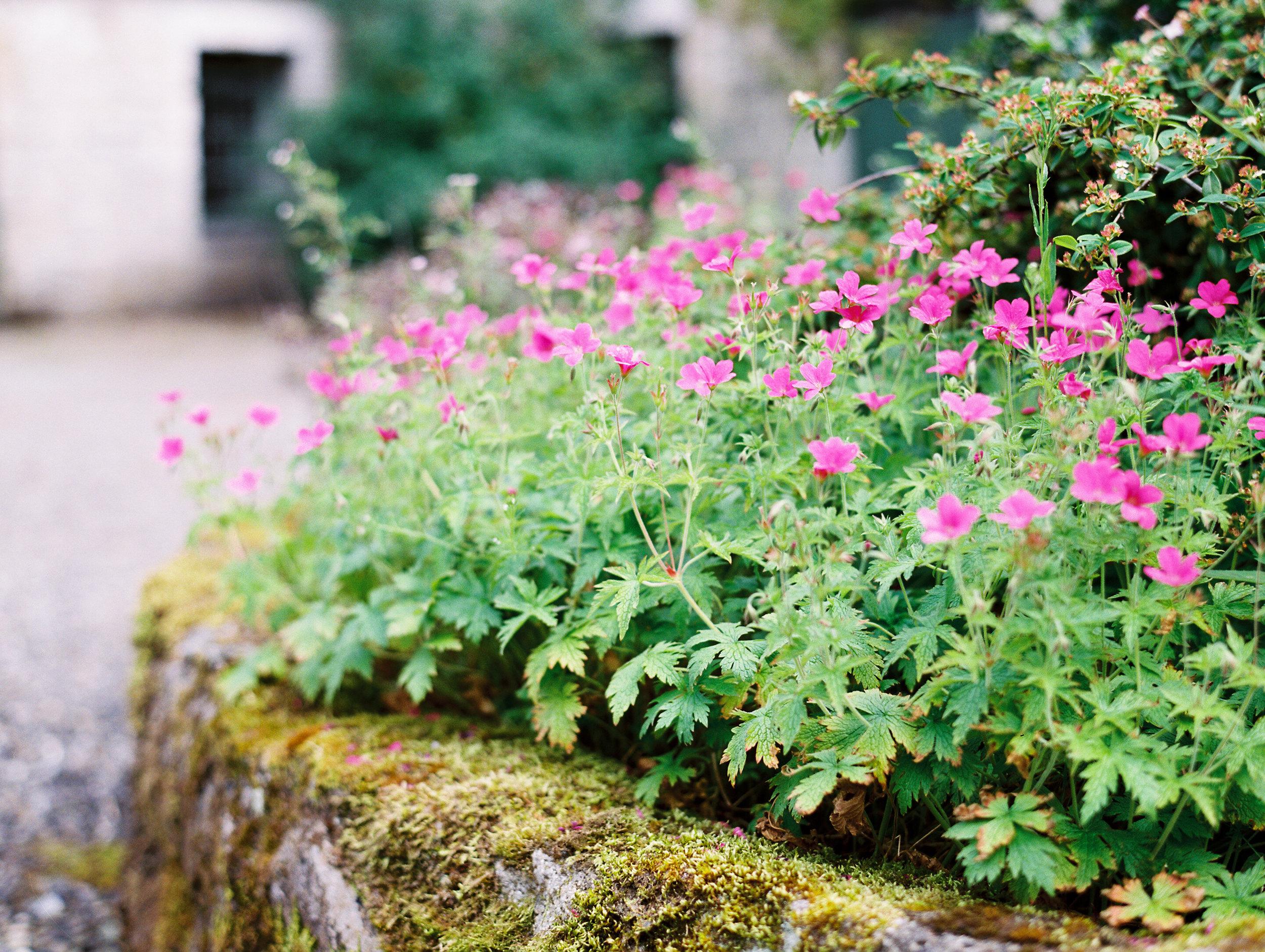 As_Ever_Photography_Secret_Garden-27.jpg