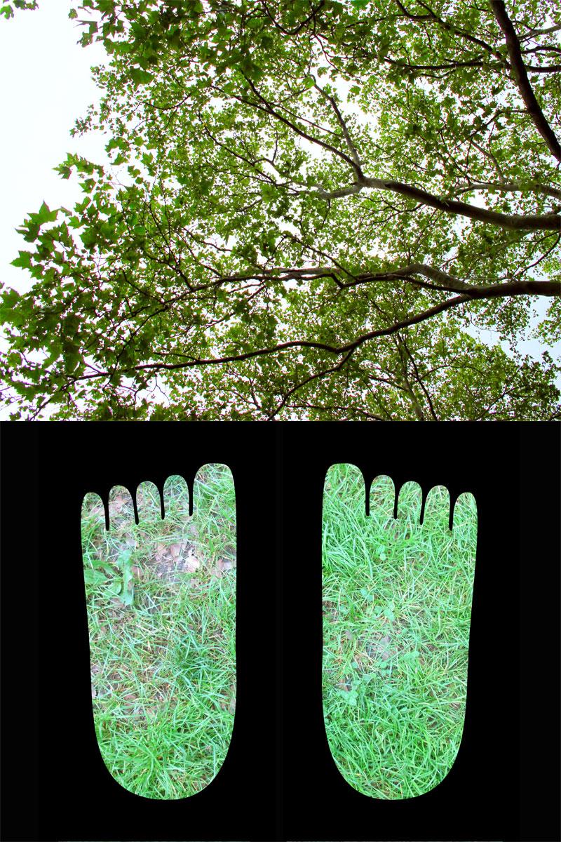 footsky_grass_tree_800.jpg