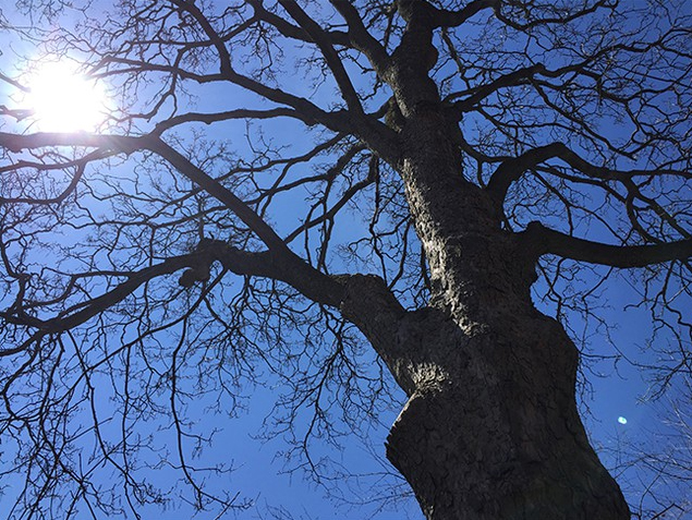 Tree_Perspectives-pic.jpg