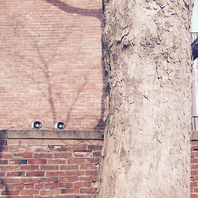 Tree eavesdropping