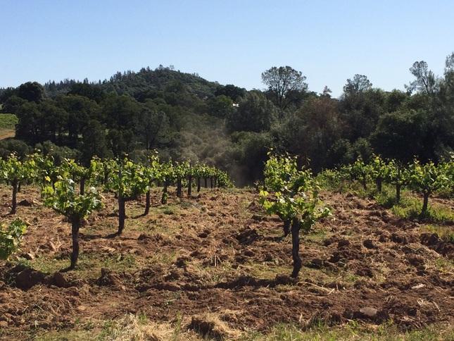 cobb vineyard.JPG