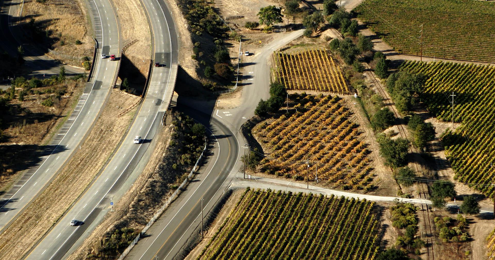 Vineyard 101 (5).jpg