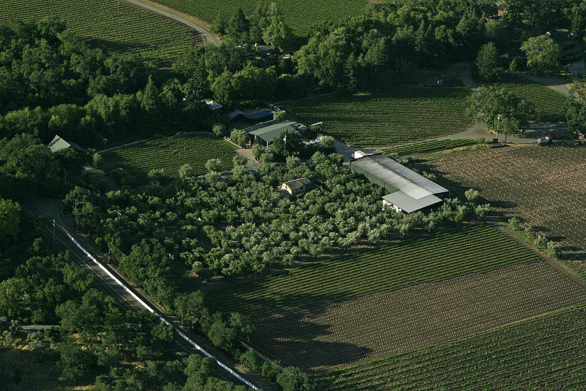 Turley Estate Vineyards.jpg