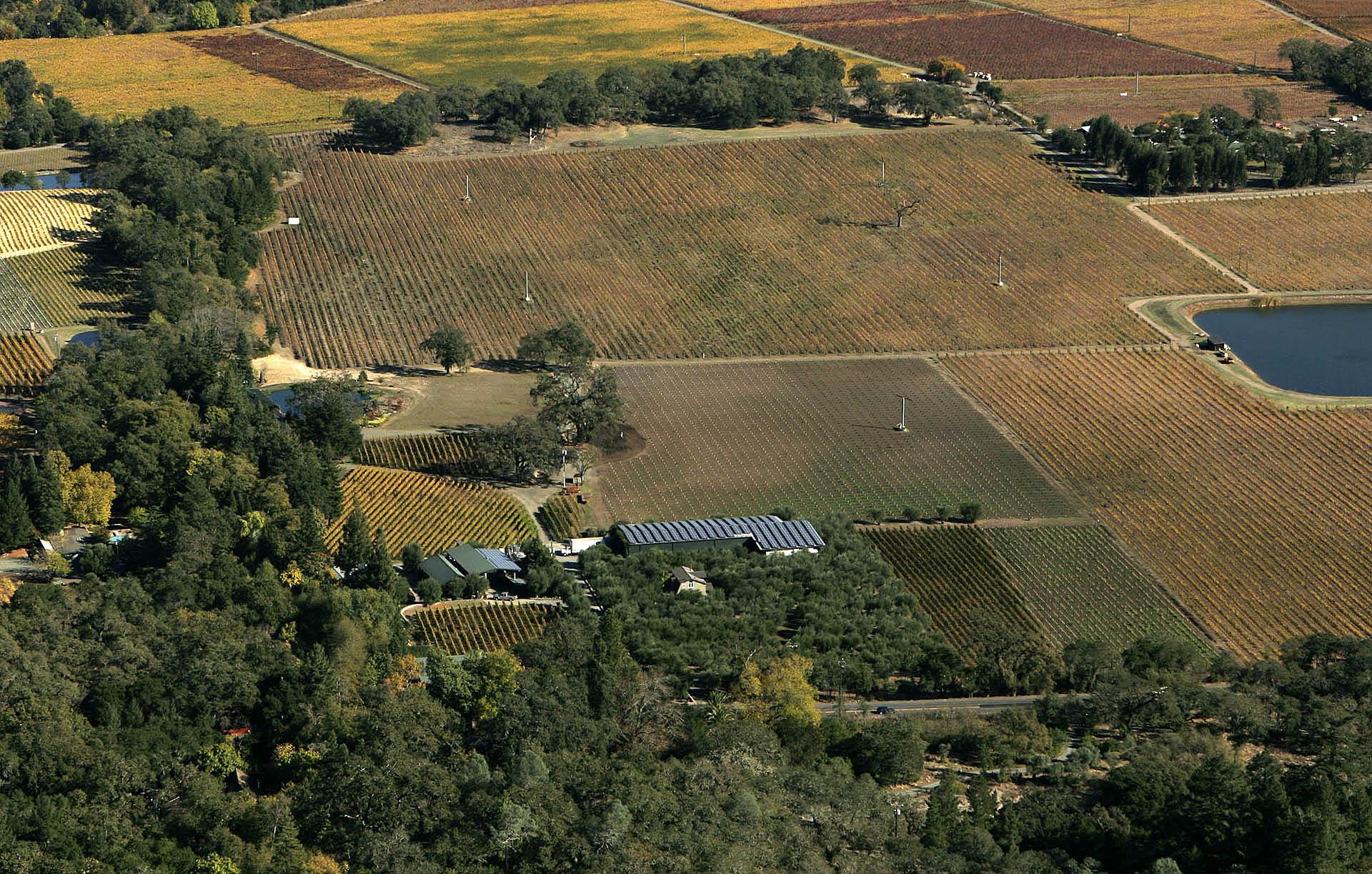 Turley Estate Vineyards  2.jpg