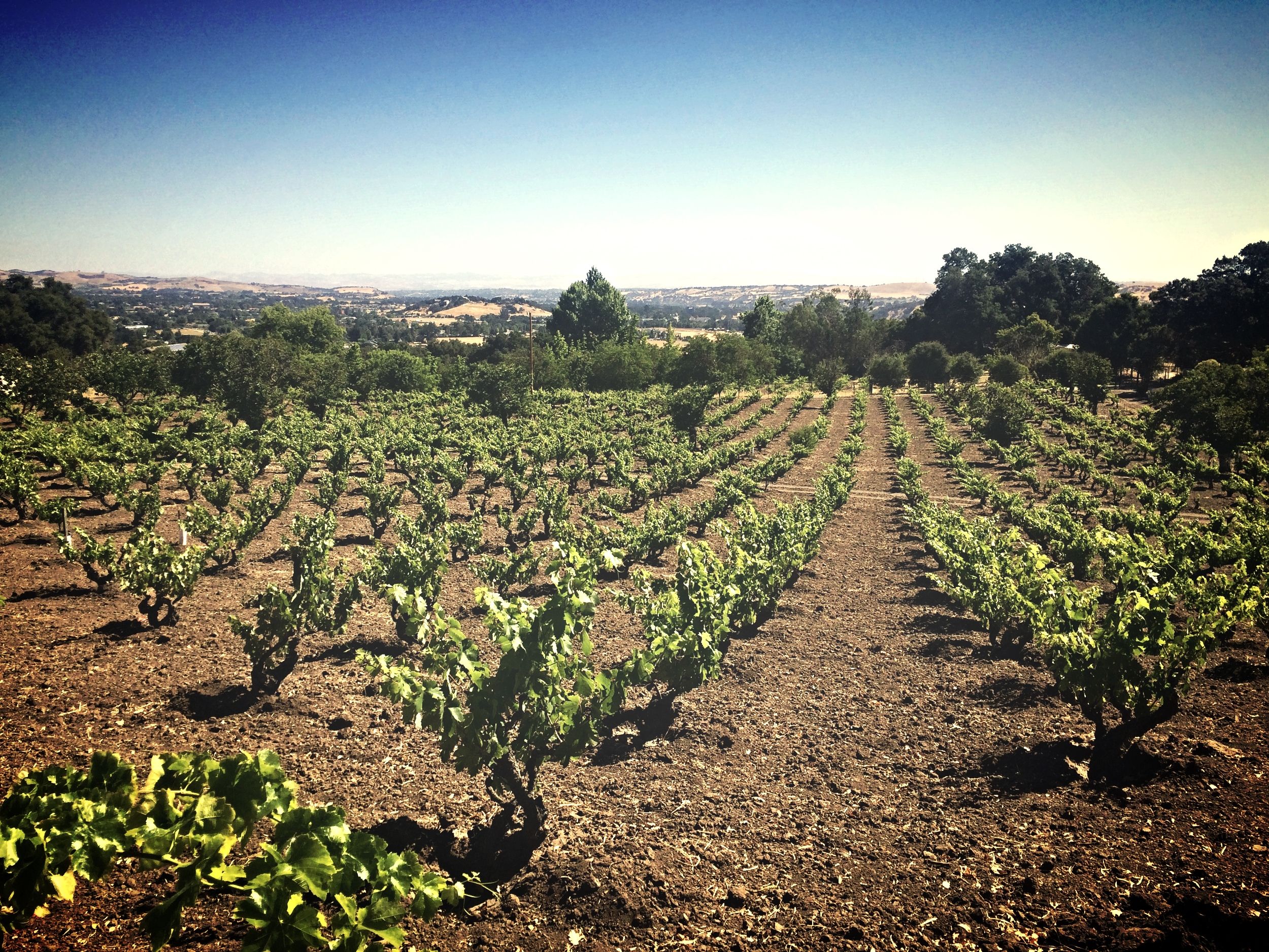 Amadeo's old vine Zinfandel