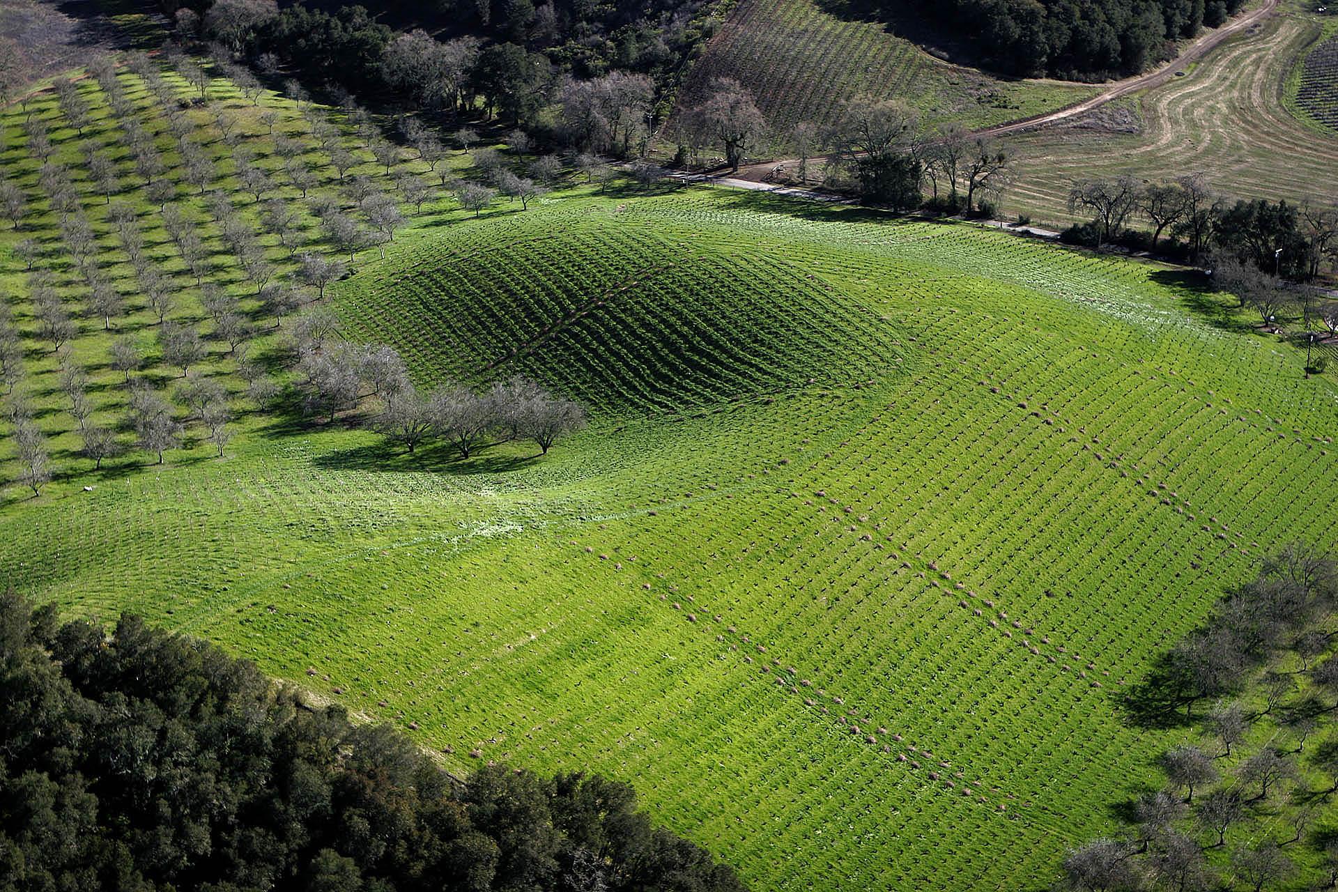 Ueberroth Vineyard, Paso Robles green.jpg