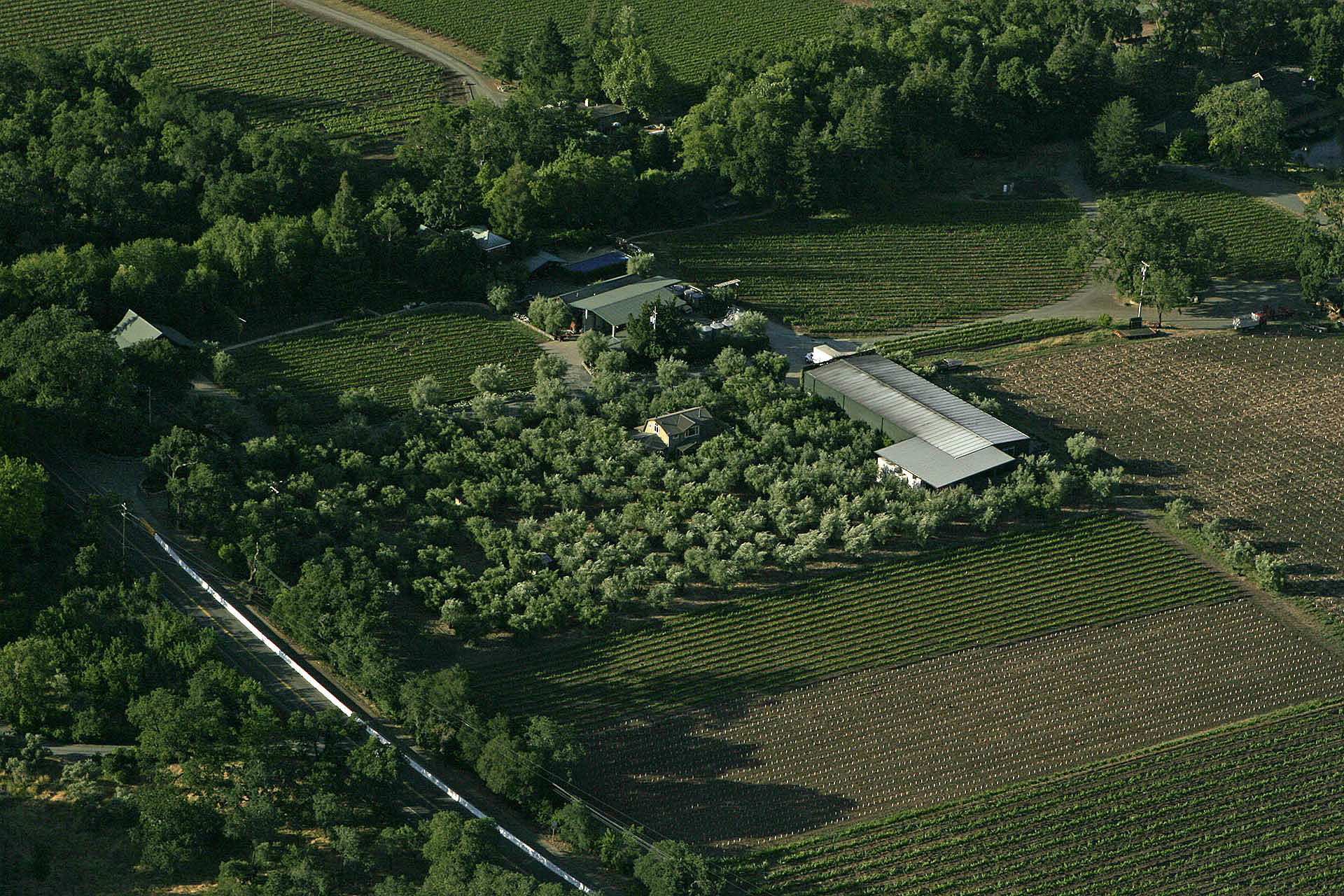 Aerial view of the Estate Vineyard, showing the 100+ year-old olive grove.