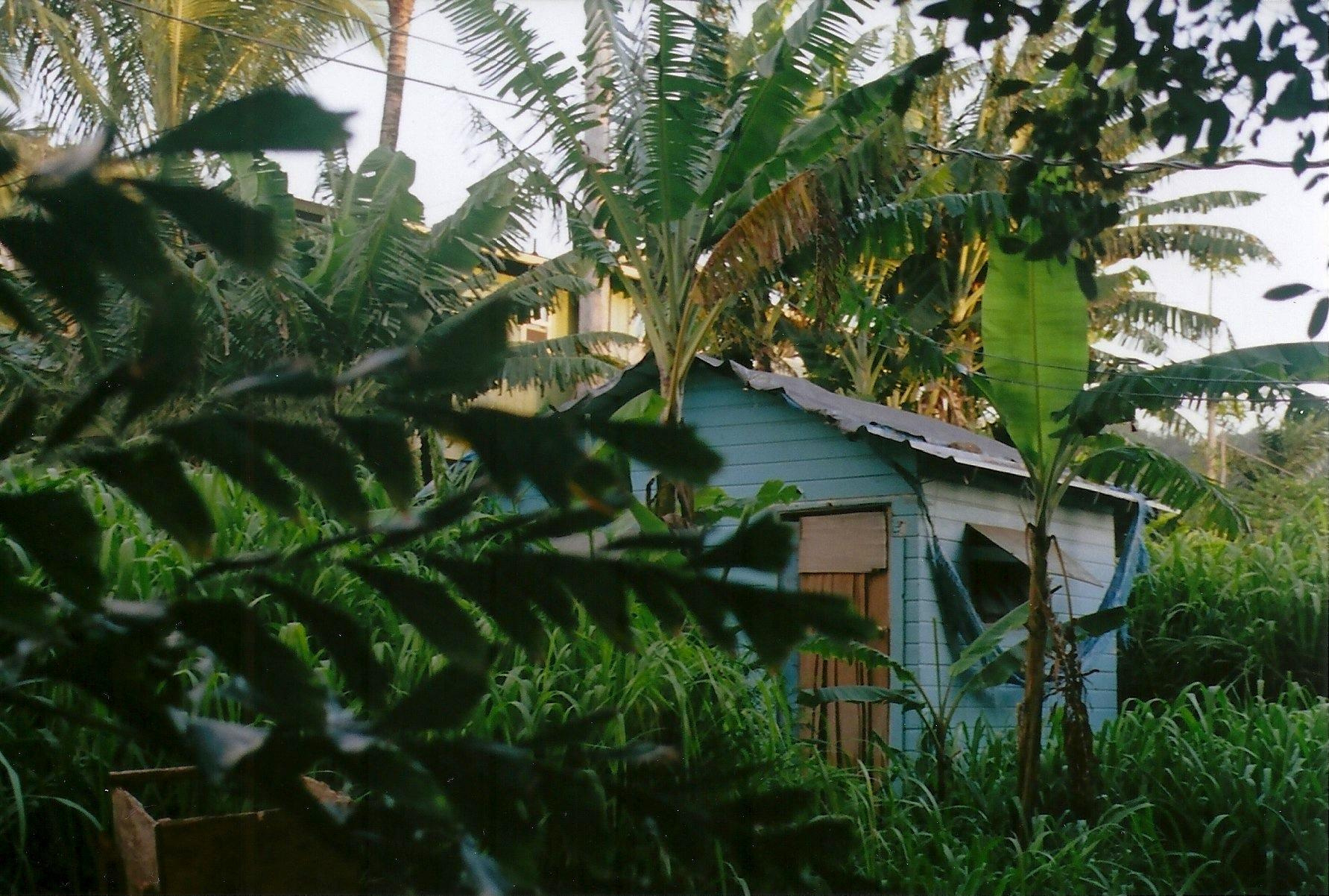 Hawaii_Spring2014_3.jpeg