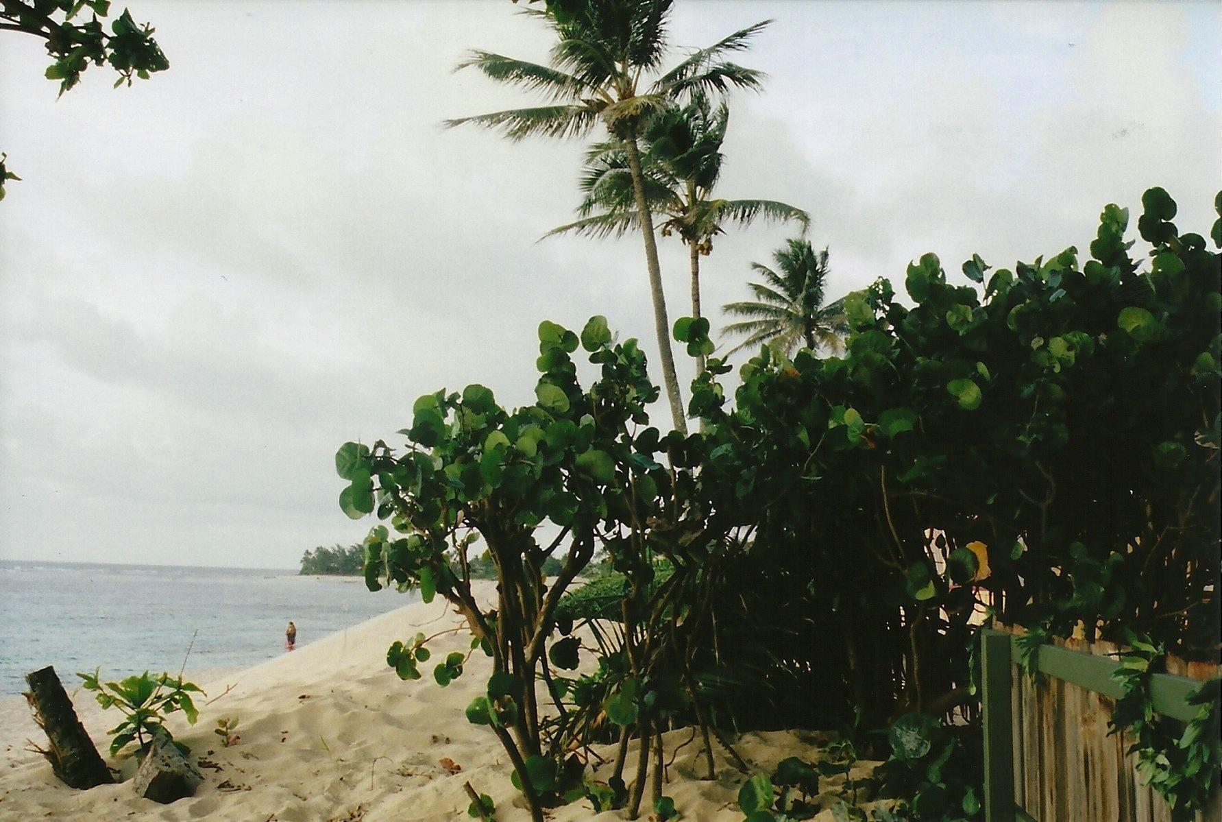 Hawaii_Spring2014_22.jpeg