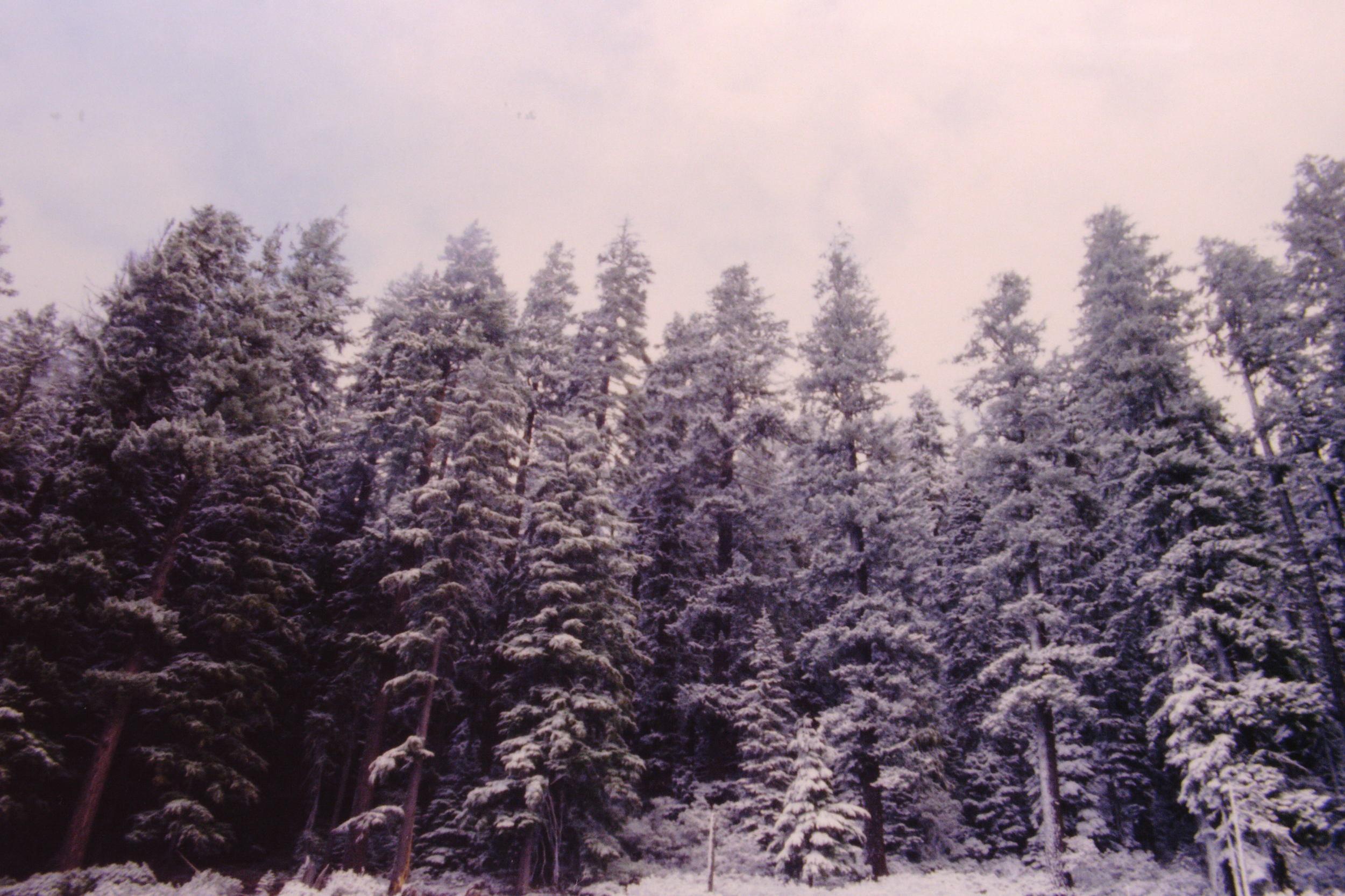 KodakEktachromeSlide(Portland--SanDiego)82.JPG