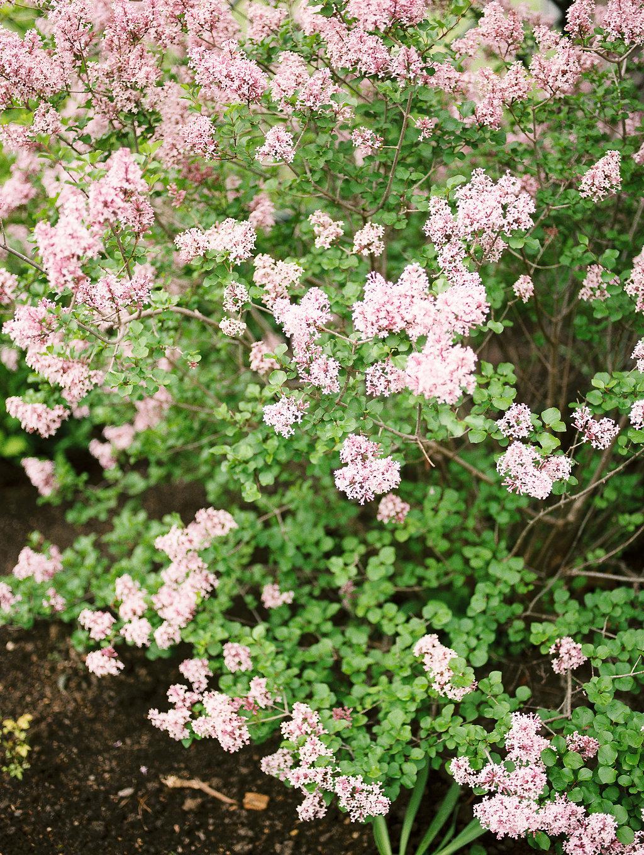 BotanicalGarden-104.jpg