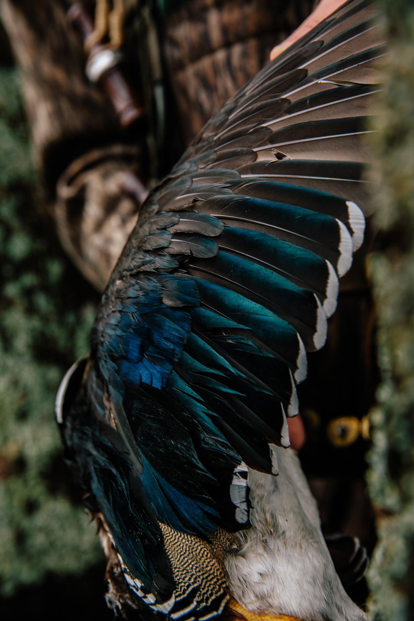 wood duck wing.jpg
