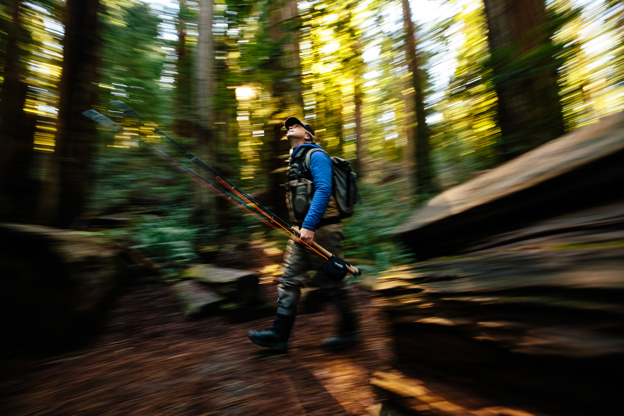 Dax in the redwoods.jpg