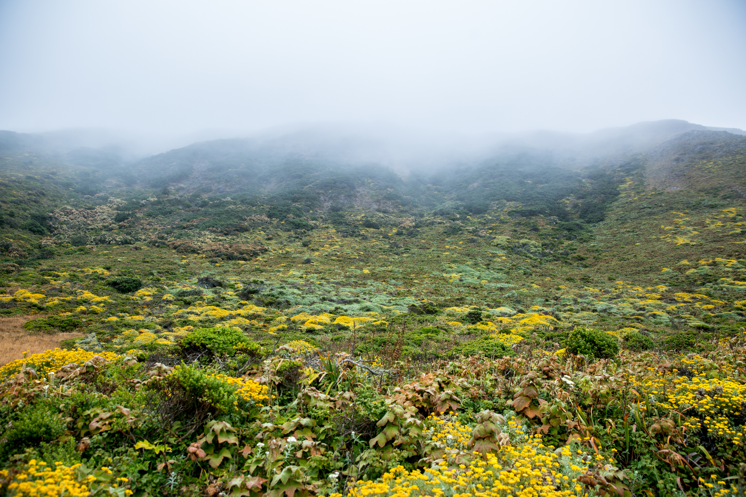 CR0A8898_CALIFORNIA_LOSTCOAST_FOG.jpg