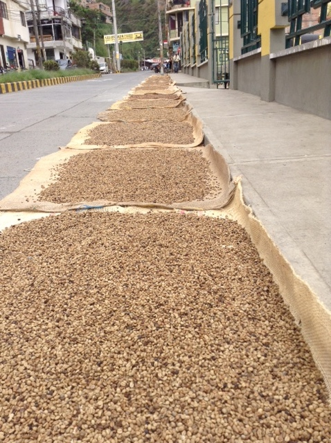 coffee drying in the streets.JPG