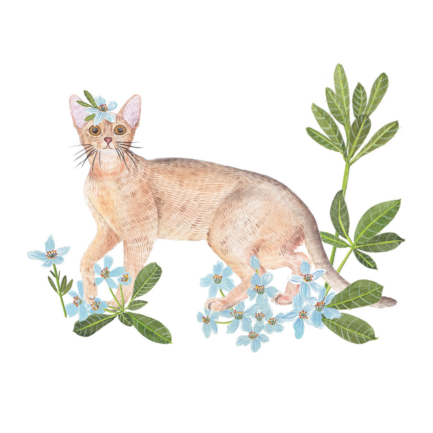 Abyssinian & Mock orange.jpg