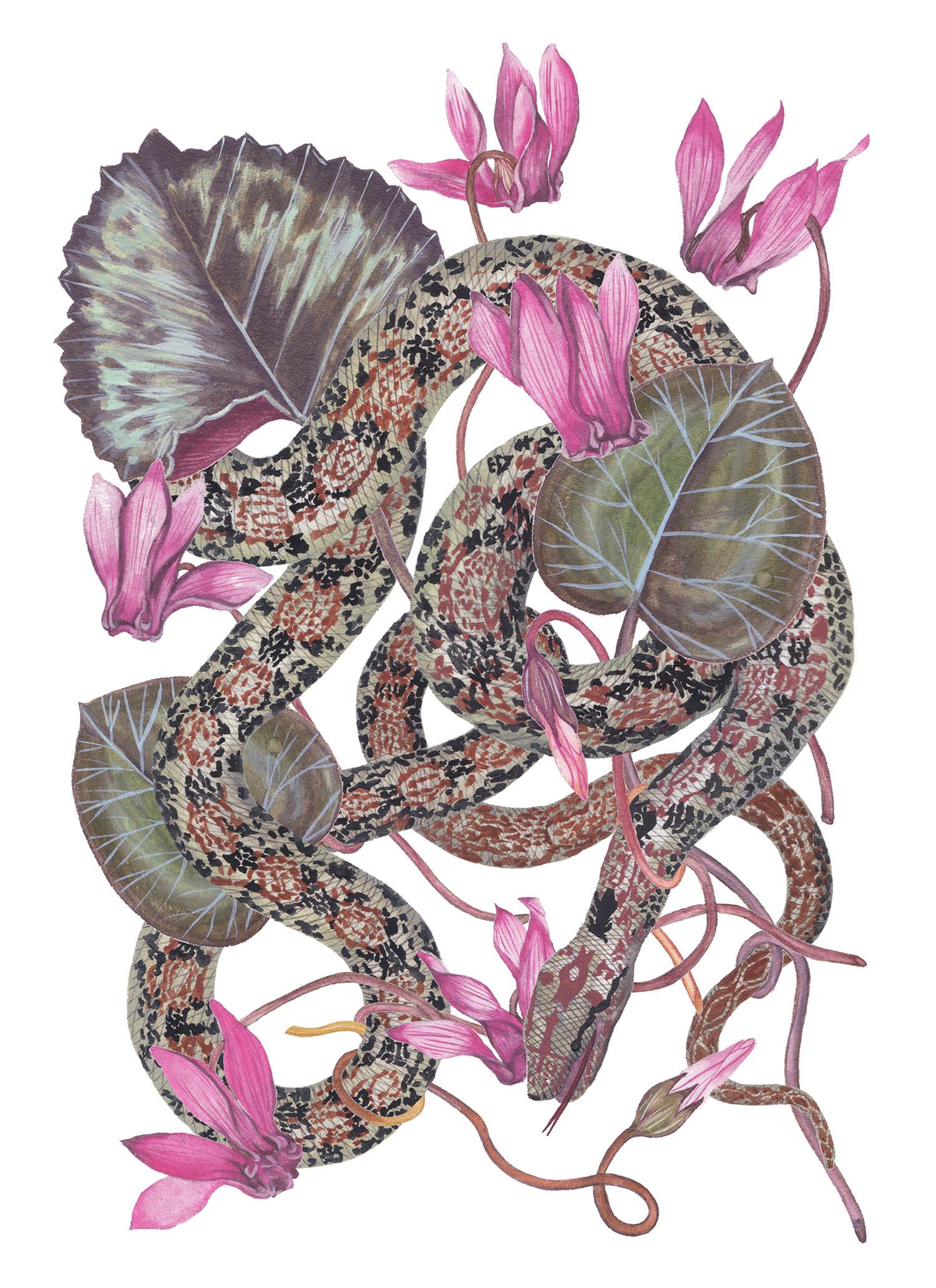 Snake Cyclamen.jpg