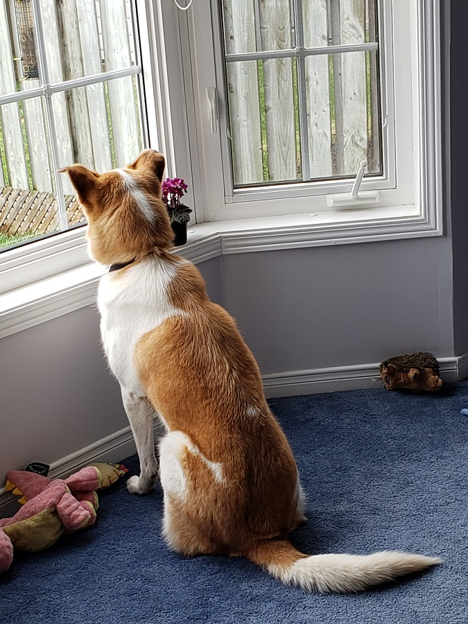 Squirrel watching.jpg