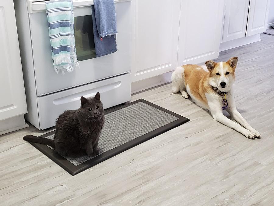 Gus & Cleo Breakfast time.jpg