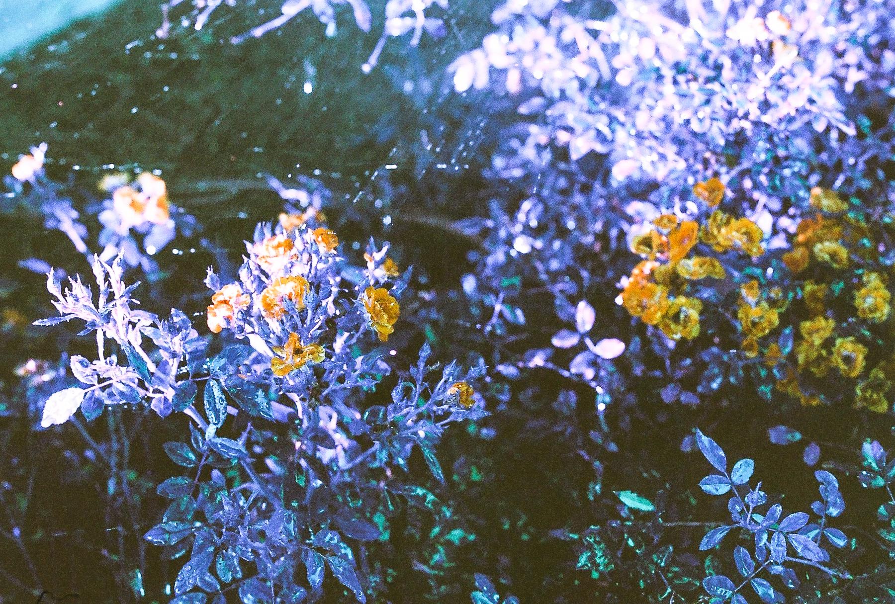 Watered flowers. (C) Paige Jarreau
