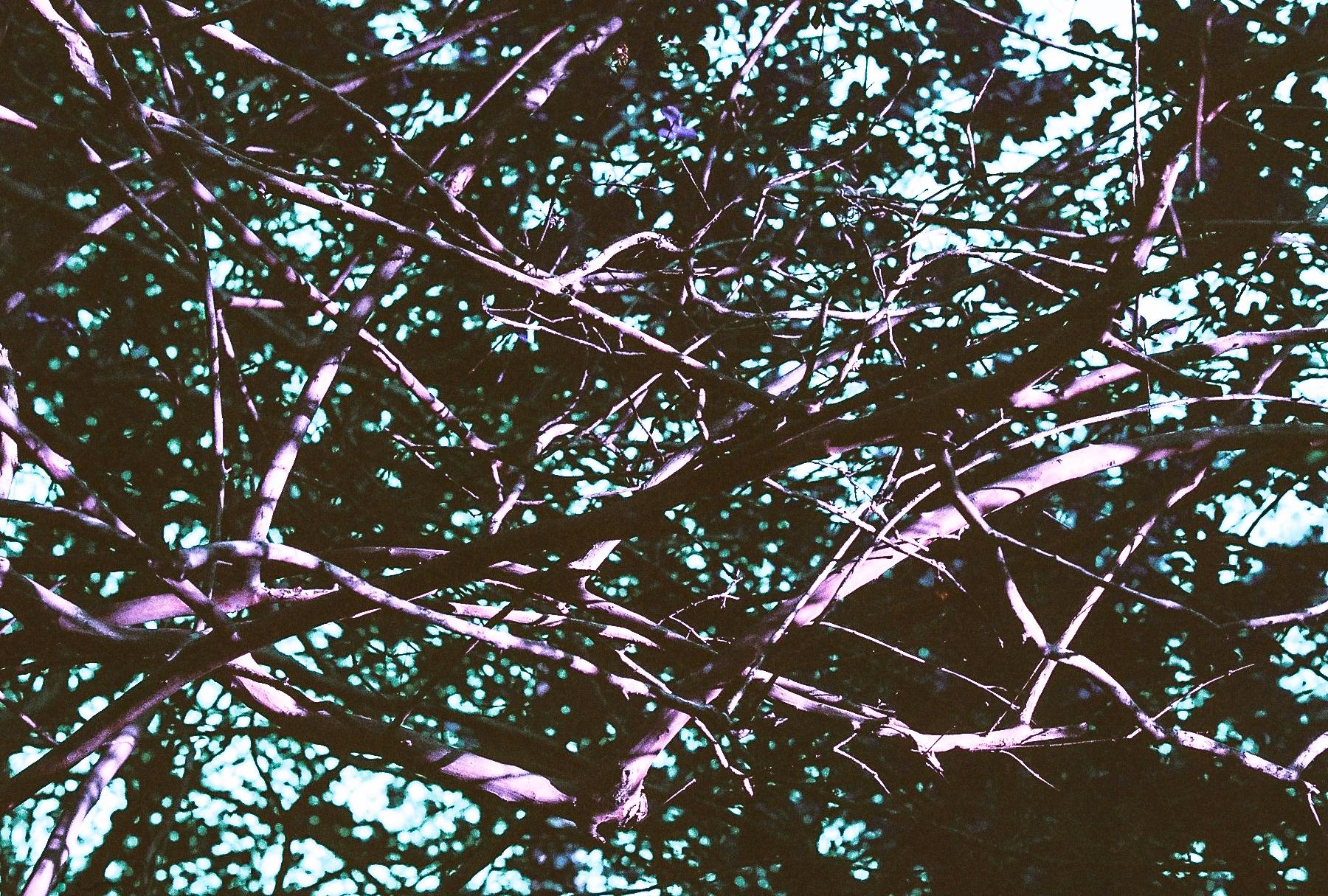 Lost. Crepe myrtle branches. (C) Paige Jarreau