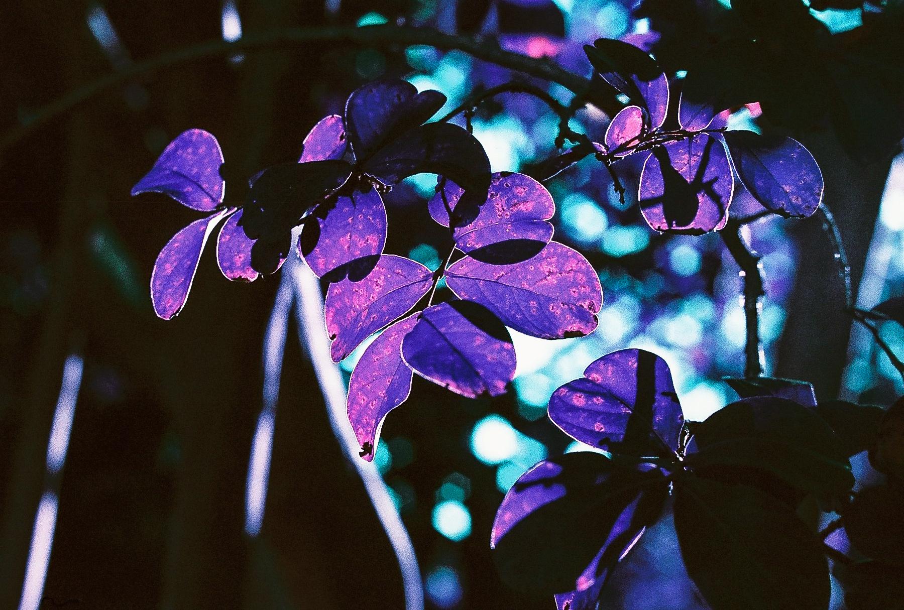 Leaves. (C) Paige Jarreau