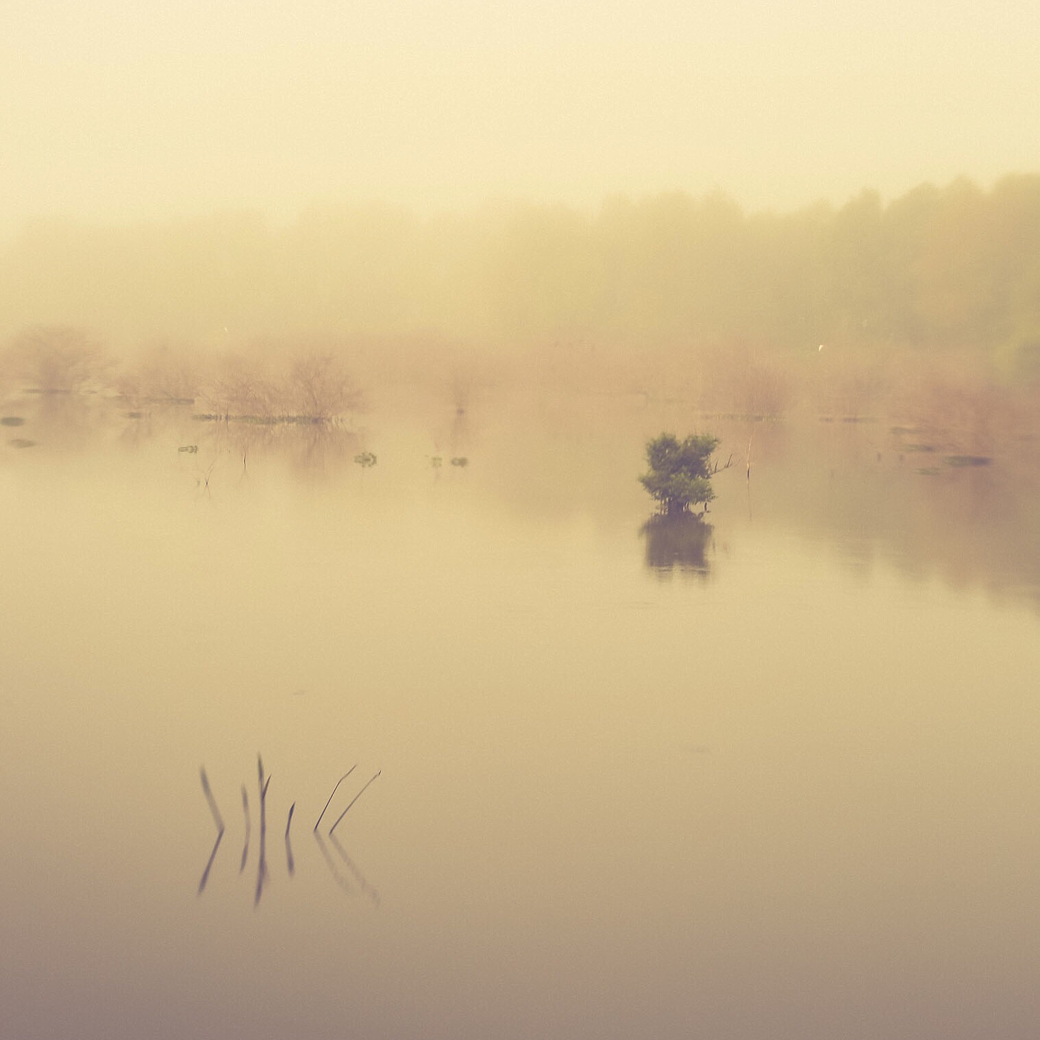 Louisiana wetlands. Photo by Paige Jarreau.
