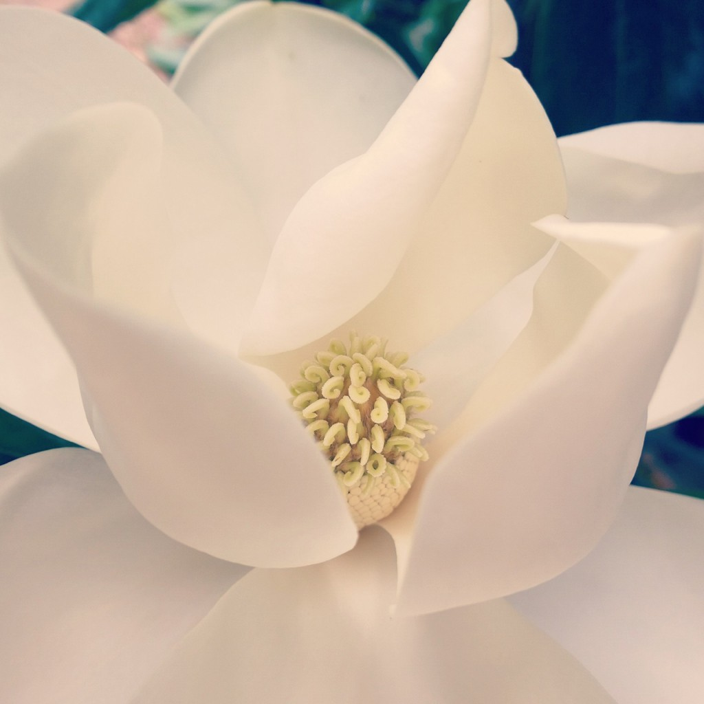 If the magnolia flower isn't awe-inspiring, I don't know what is.