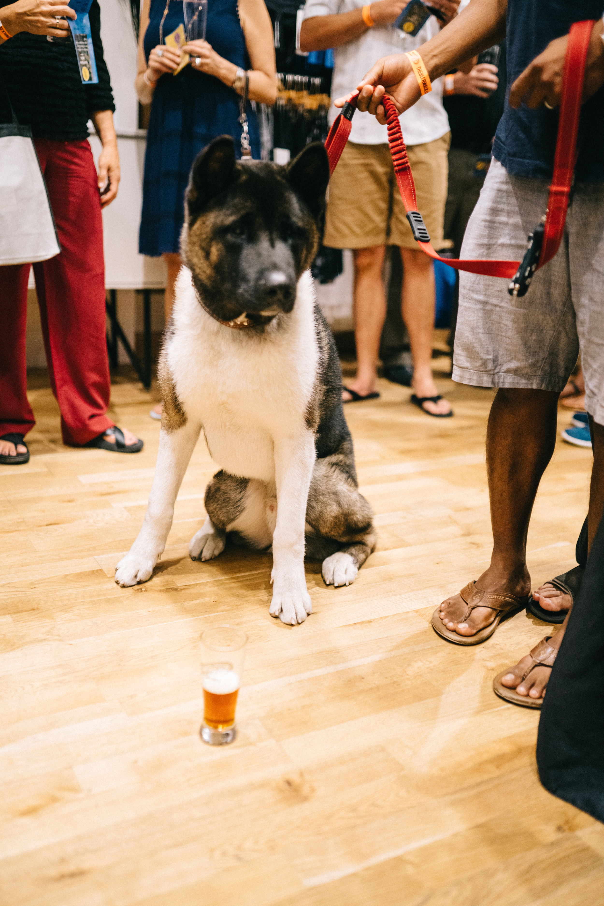 At one point, we were walking with backup (like the movie, The Hangover), Hercules, the Akita. FYI: He didn't drink it.