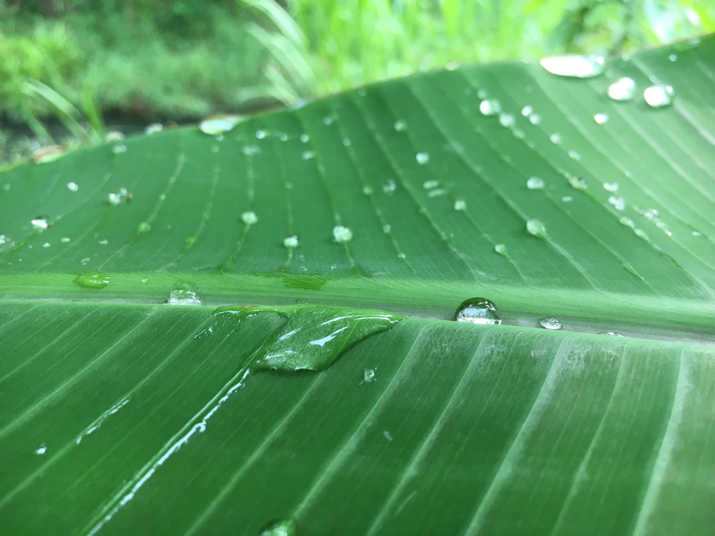 Day 1: I'm grateful for the lush nature that surrounds me during rainy season in northern Thailand.