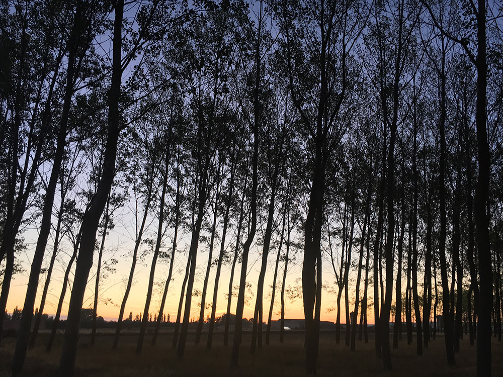 Camino17Sep1.jpg