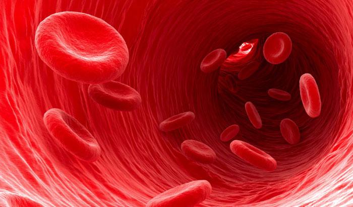 red-blood-cells-1.jpg