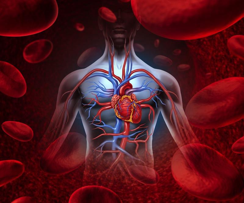 circulatory-system-diagram-130925.jpg