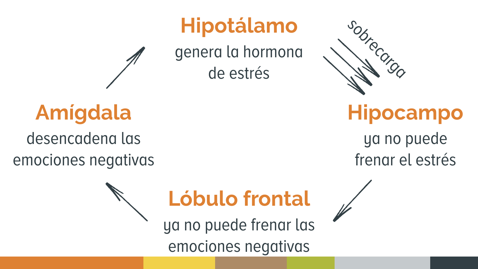 El círculo del estrés