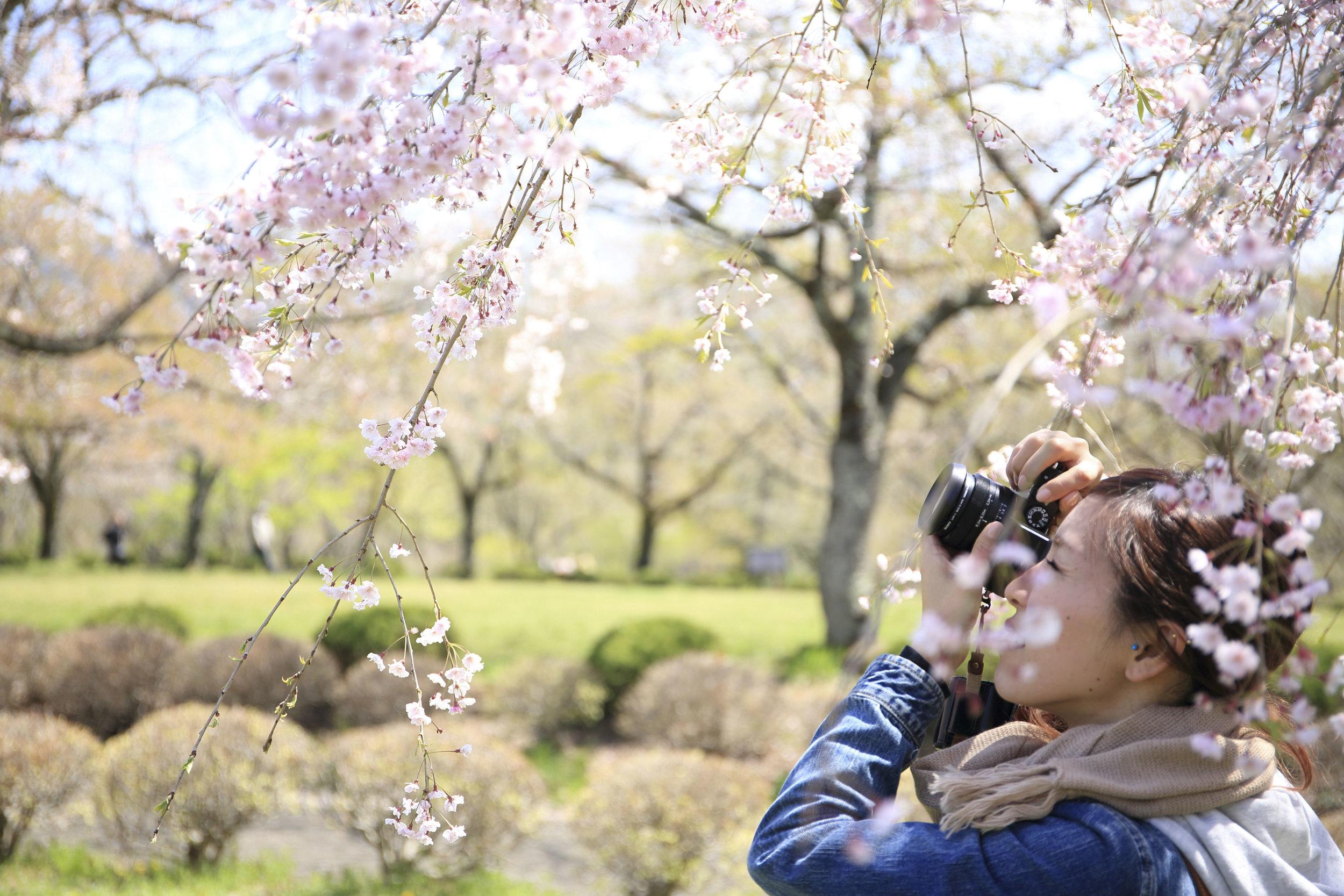 Tomando fotos del árbol frutal
