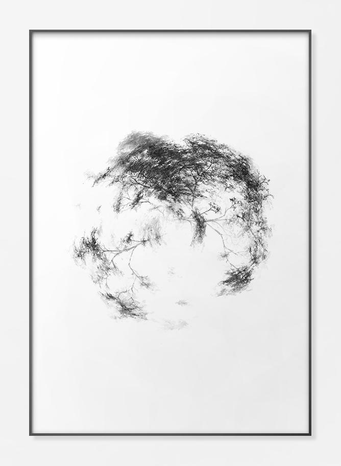 Trees - FPPLC0019