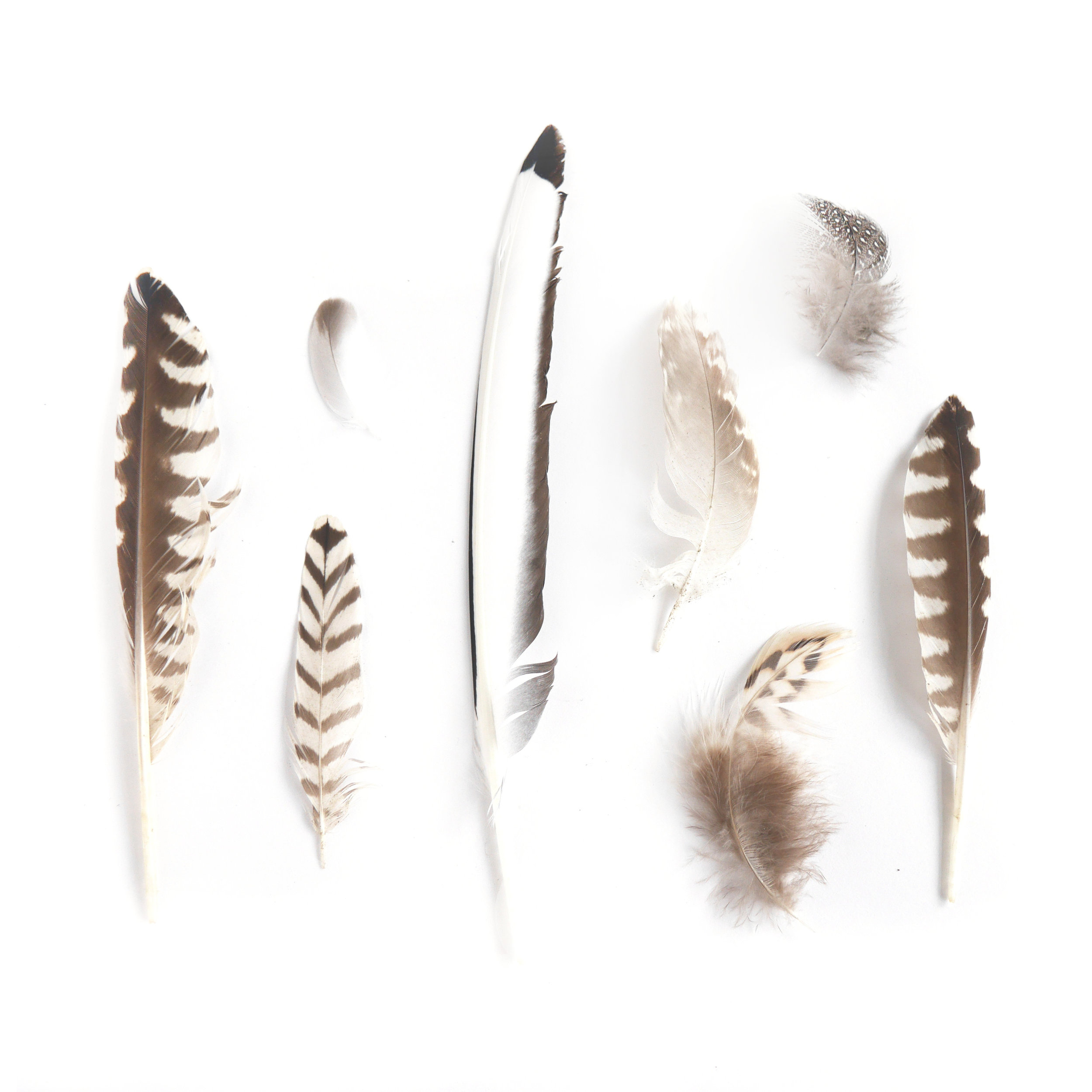 Feathers found whilst walking