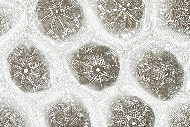 Aura II, 2013 - Detail II