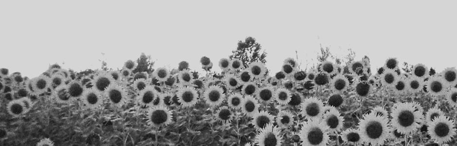 [via  Sun Kil Moon ]