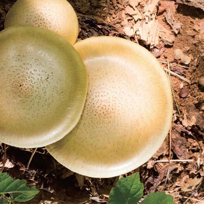 5. Takahiro Kawaguchi / Utah Kawasaki -  Amorphous Spores  [Erstwhile]