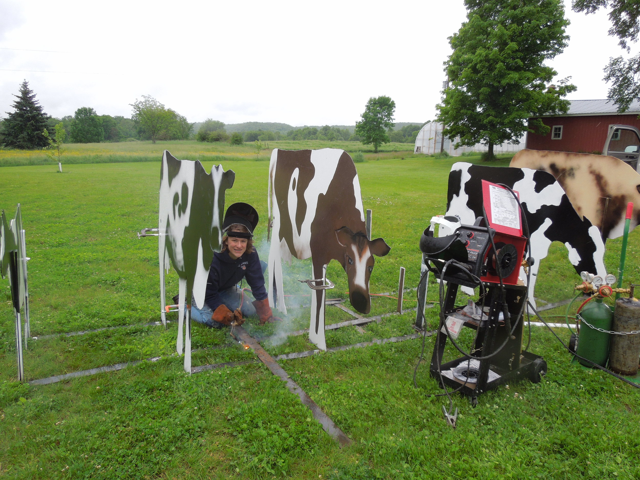 10 cows.JPG