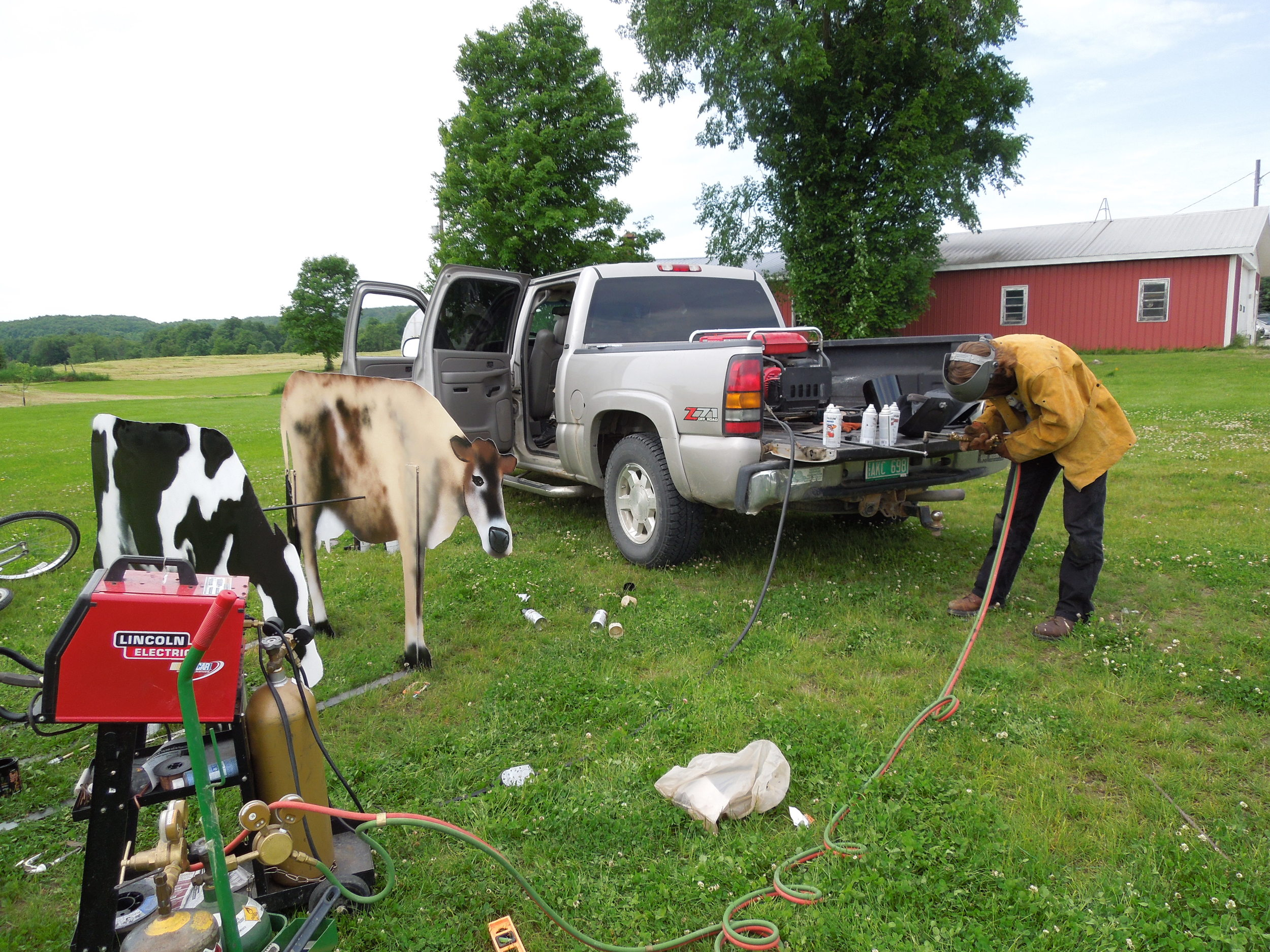 9 cows.JPG