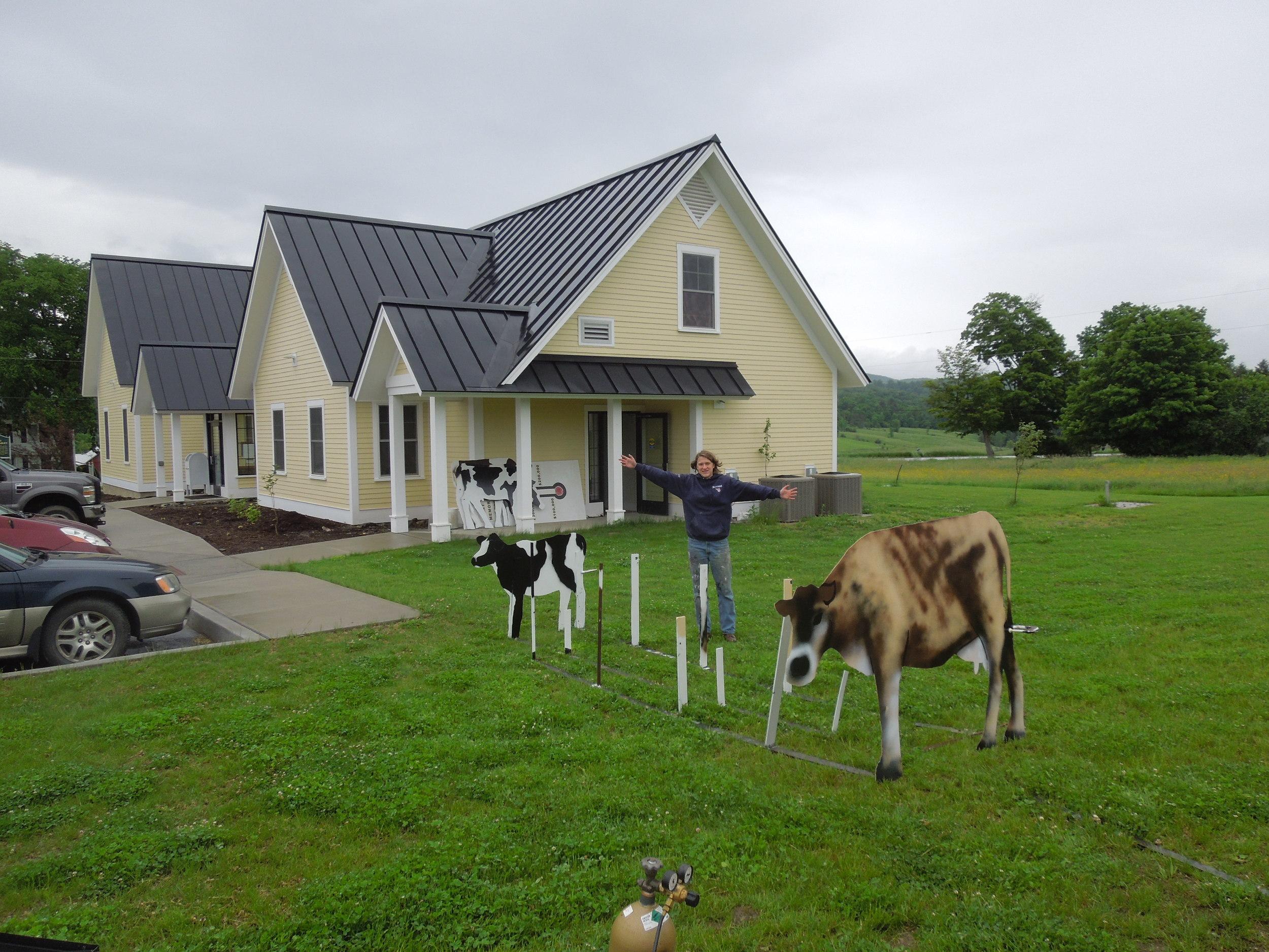 8 cows.JPG