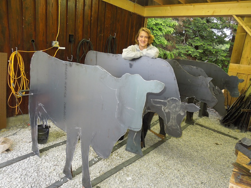 5 cows.JPG